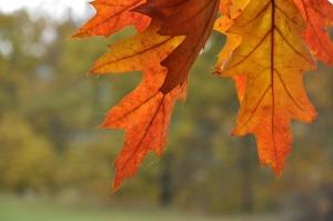 autumn-648005_1280